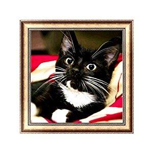 JAGENIE DIY Cute Cat 5D Diamond Embroidery Painting Cross Stitch Art Craft Decor Gift 30X30cm