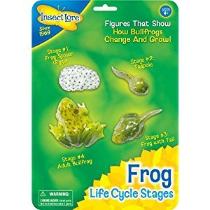 Life Cycle Stages-Frog