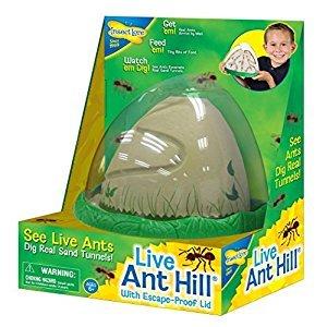 Anthill