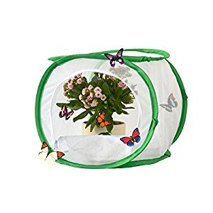 DalosDream Insect and Butterfly Habitat Terrarium Pop-up - 12 Inches Tall (White)